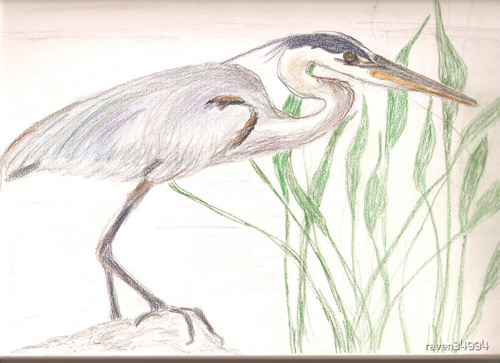 another heron by raven34994