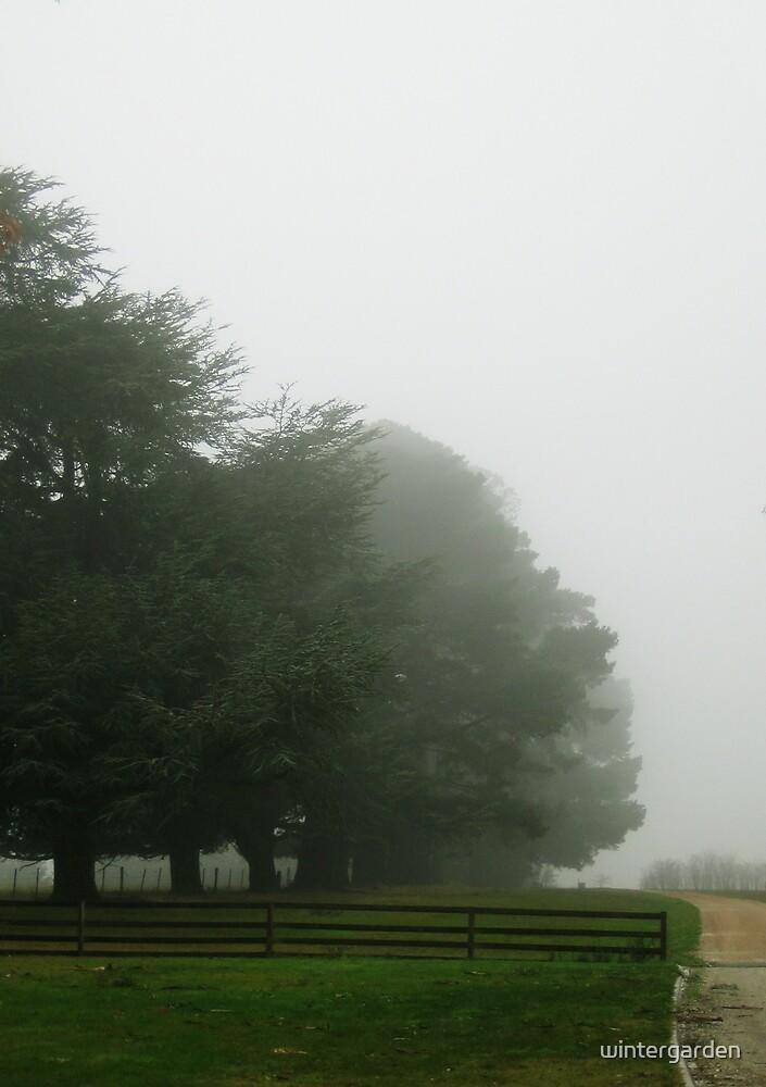 morning fog by wintergarden