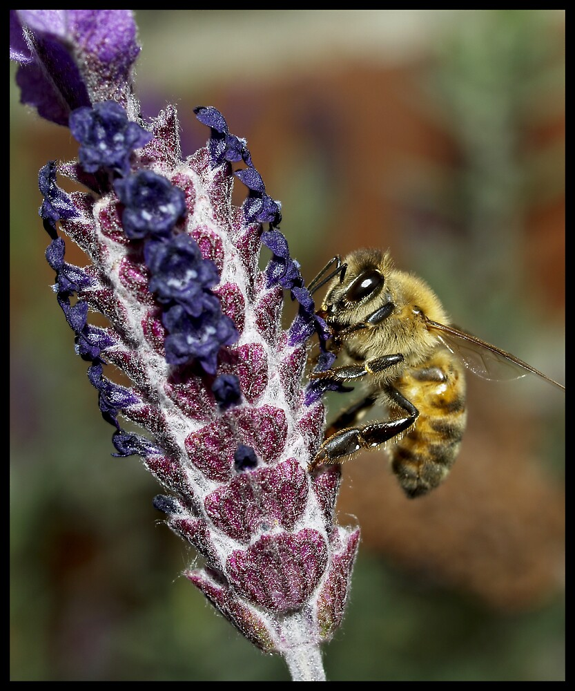 Ze Pollen Collector by Jenni77