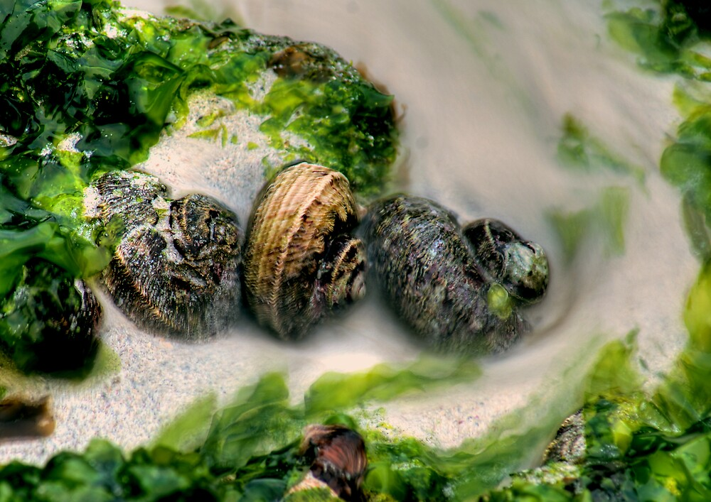 Shells by alistair mcbride