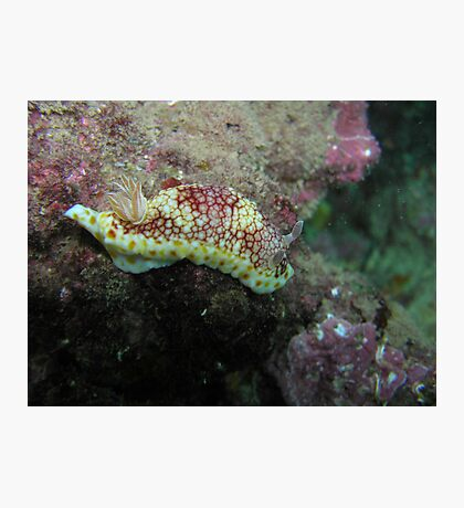 Nudibranch  Photographic Print