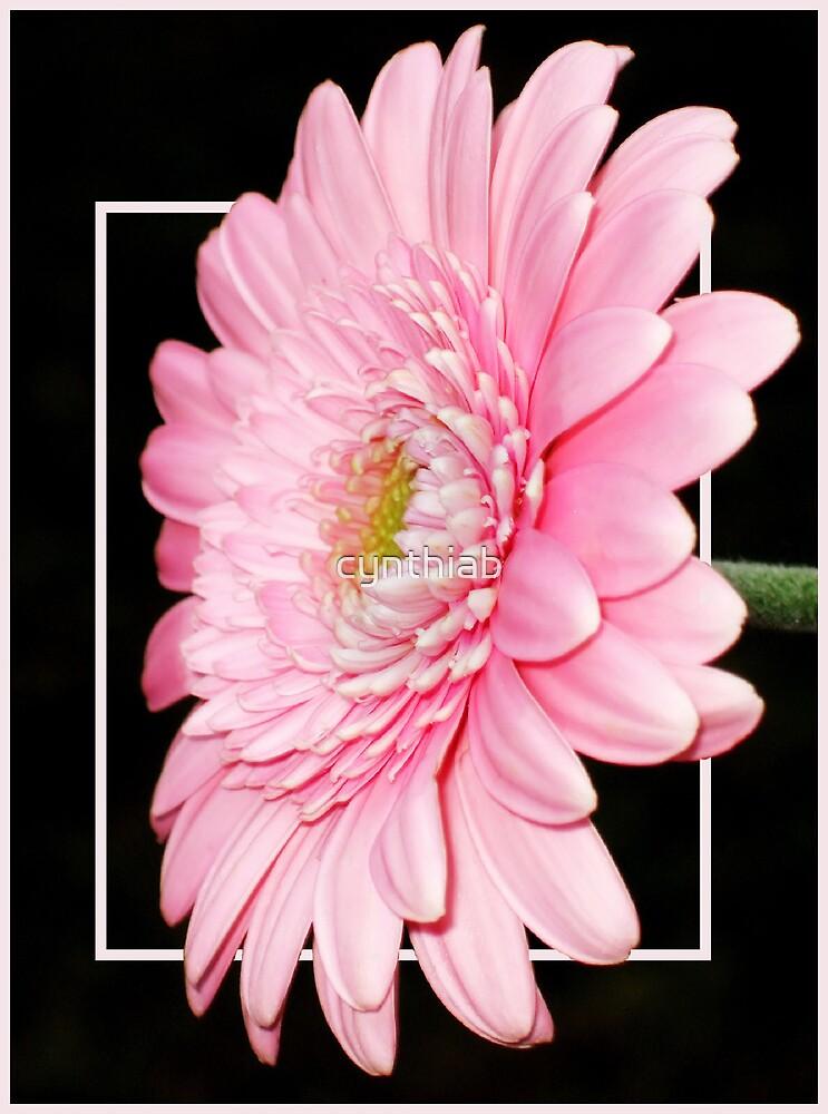 pink by cynthiab