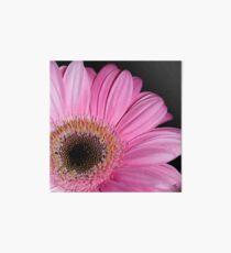 Pink Gerbera  Art Board