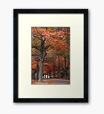 Oaks on Gnarr Framed Print