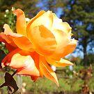 Peachy Kean by Martin Campbell