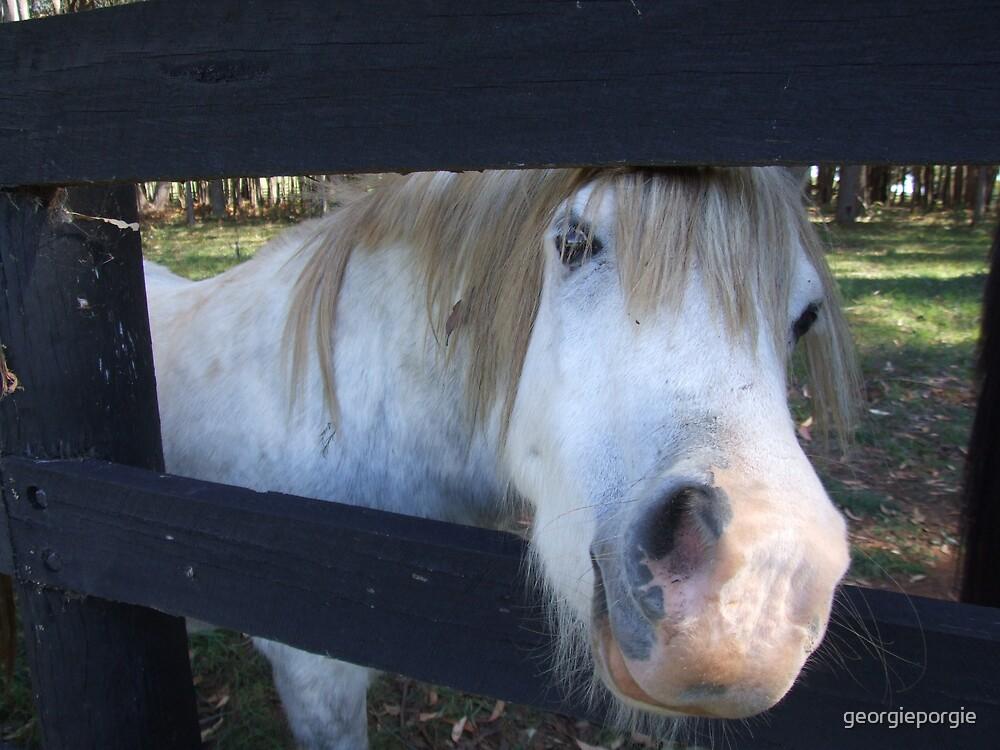 White Pony by georgieporgie