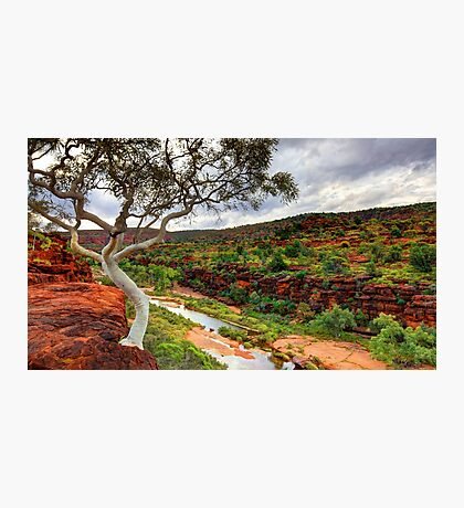 The Finke River - Palm Valley Photographic Print