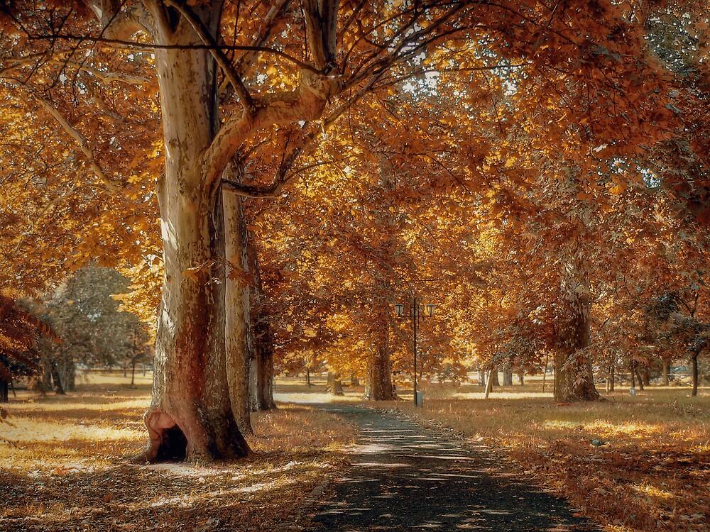 Autumn symphony by GabiB