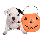Halloween Bulldog by idapix