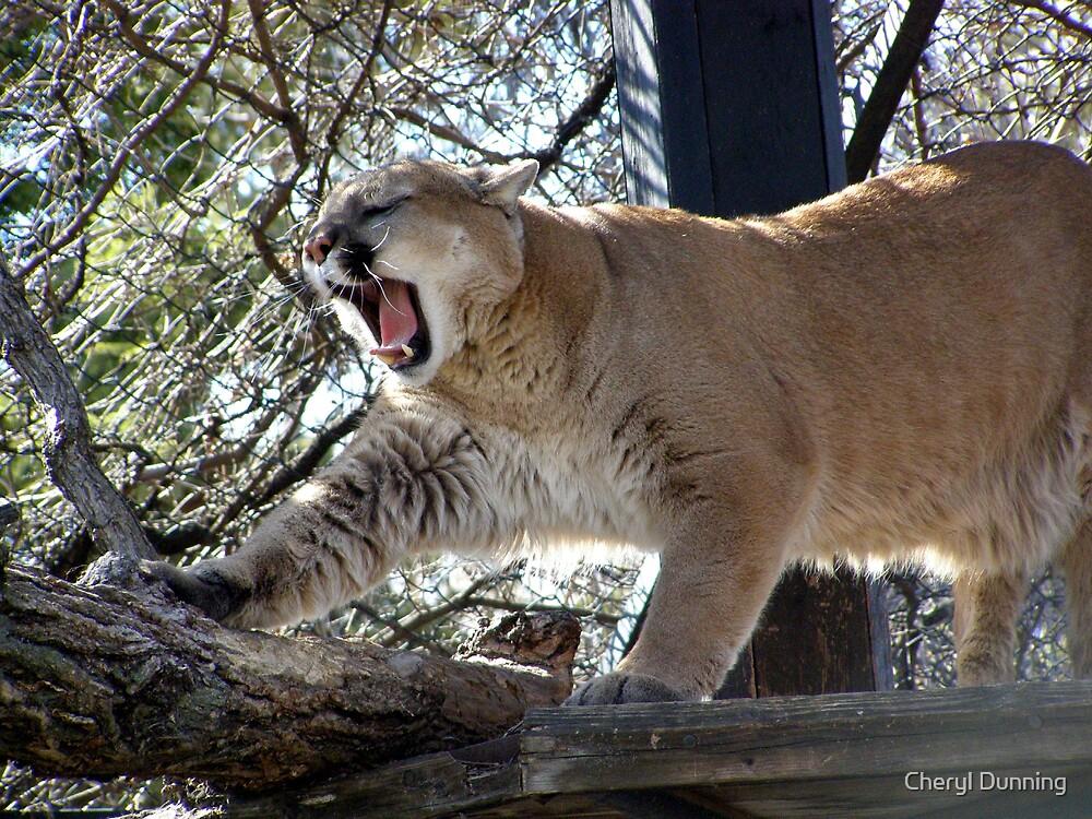 *yawn* by Cheryl Dunning