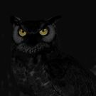 The Eyes of Night by Lisa Hildwine