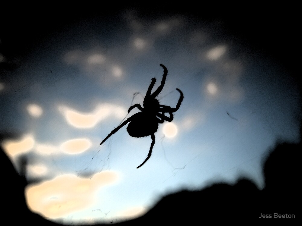 spider in the sunset... by Jess Beeton