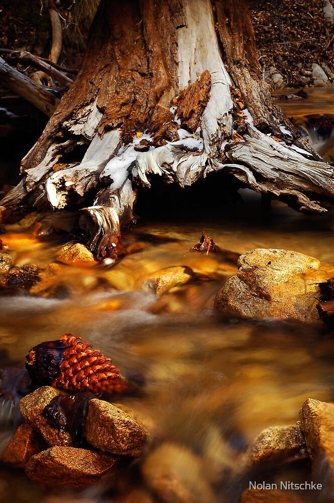 San Gorgonio Wilderness by Nolan Nitschke