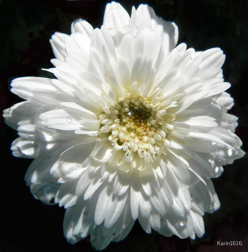 White flower by Karin1616