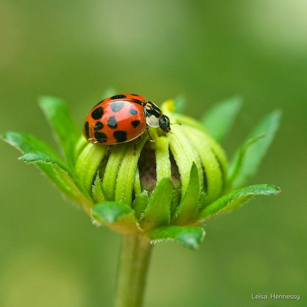 Ladybug IV by Leisa  Hennessy