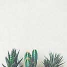 Cactus & Succulents II by Cassia Beck