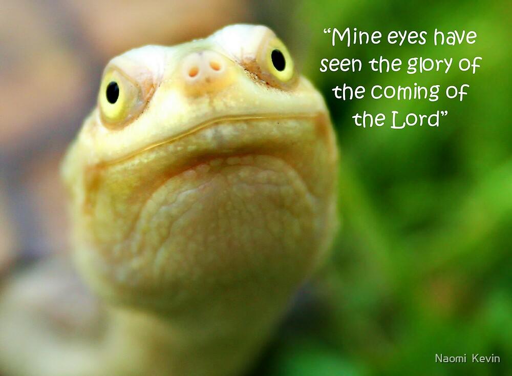 Turtle Wisdom by Naomi  Kevin