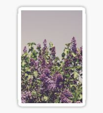 Wild Lilacs Sticker