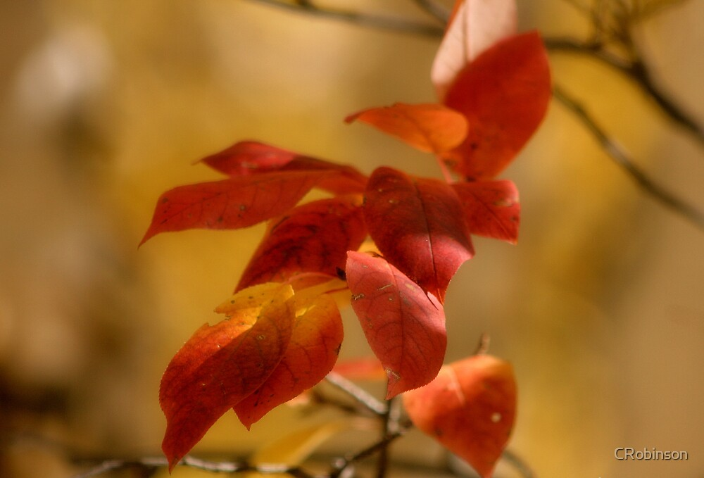 Autumn Colours by CRobinson