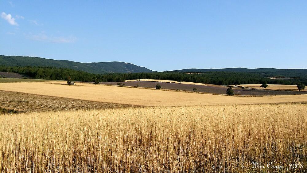 Fields of gold... by Wim Conix