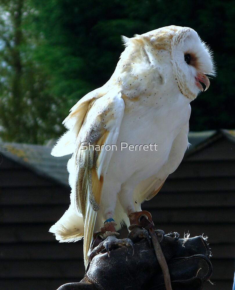 A Barn Owl by Sharon Perrett
