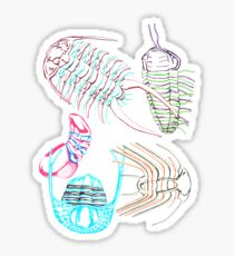 Ordovician Era Trilobites  Sticker