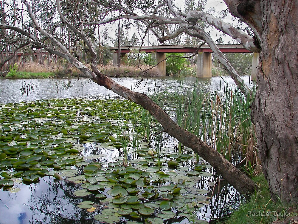 Loddon River - Bridgewater Victoria by Rachael Taylor