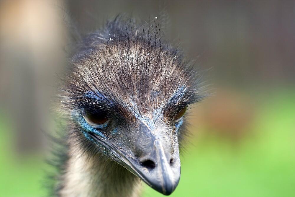 Australia Emu by Peter Ede