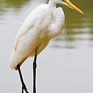 Egret by Jerry  Mumma