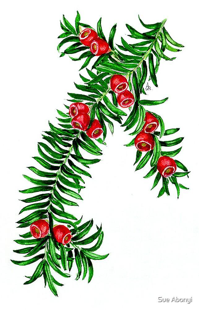 Yew - Taxus baccata by Sue Abonyi