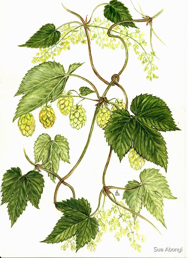 Common Hop - Humulus lupulus by Sue Abonyi