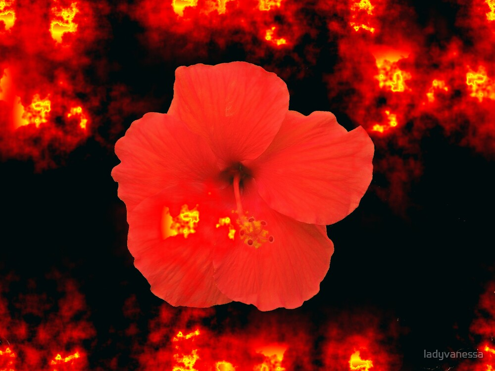 Fire Breathing Hibiscus by ladyvanessa