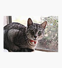 Rescue Cat from Aussie Rescue SD Photographic Print