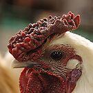 A chook's eye by Peter Hammer