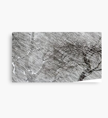 9.3.2017: Apple Tree and Snowfall Canvas Print