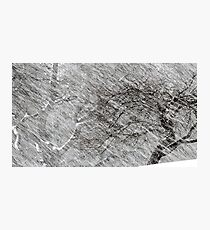 9.3.2017: Apple Tree and Snowfall Photographic Print