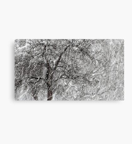 9.3.2017: Apple Tree and Snowfall II Canvas Print