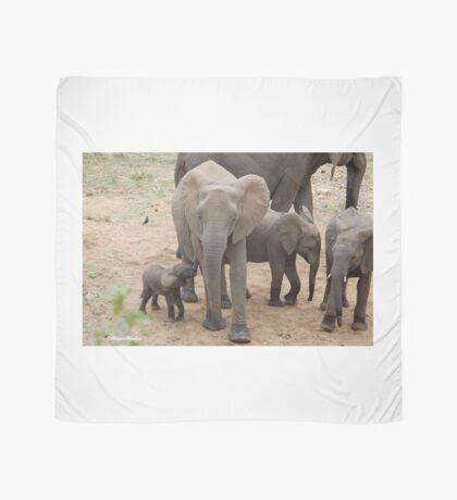 A BABY NEEDS FEEDING -  THE AFRICAN ELEPHANT – Loxodonta Africana Scarf