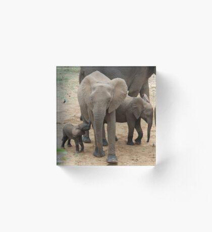A BABY NEEDS FEEDING -  THE AFRICAN ELEPHANT – Loxodonta Africana Acrylic Block