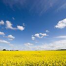 Canola / Rape Seed Field by AustralianImagery