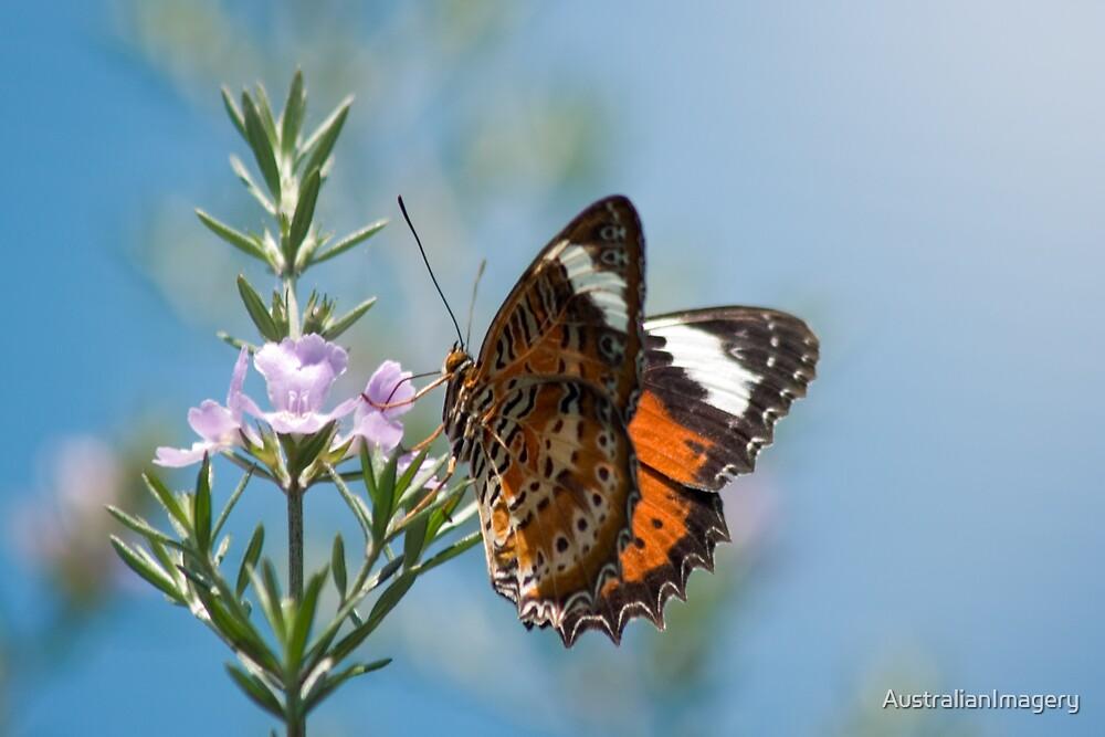 Butterfly on Pink Flower by AustralianImagery