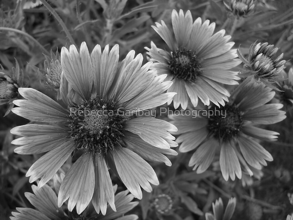 Colourless Perfection by Rebecca Garibay Photography