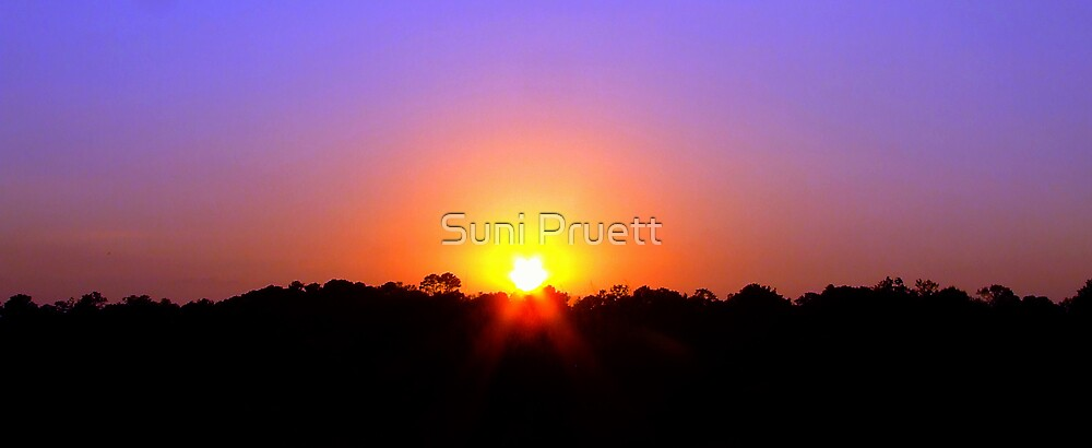 Morning Light  by Suni Pruett