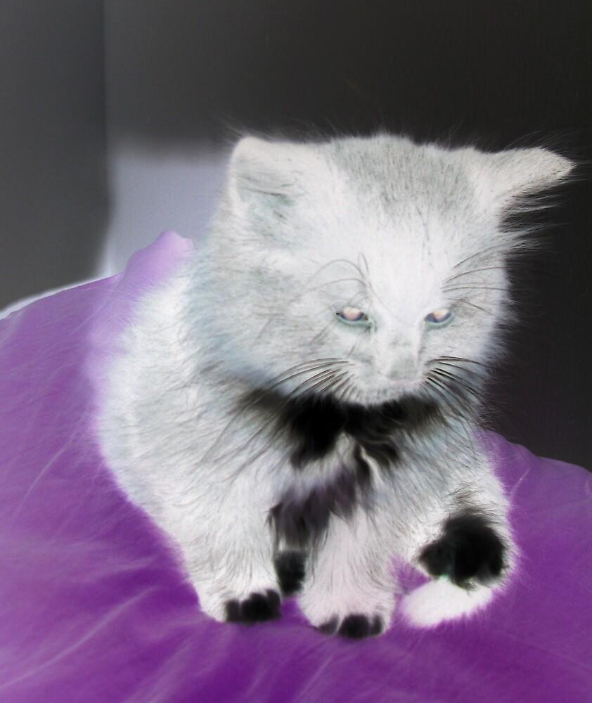 crazyy kittty by ashleymaiwoo