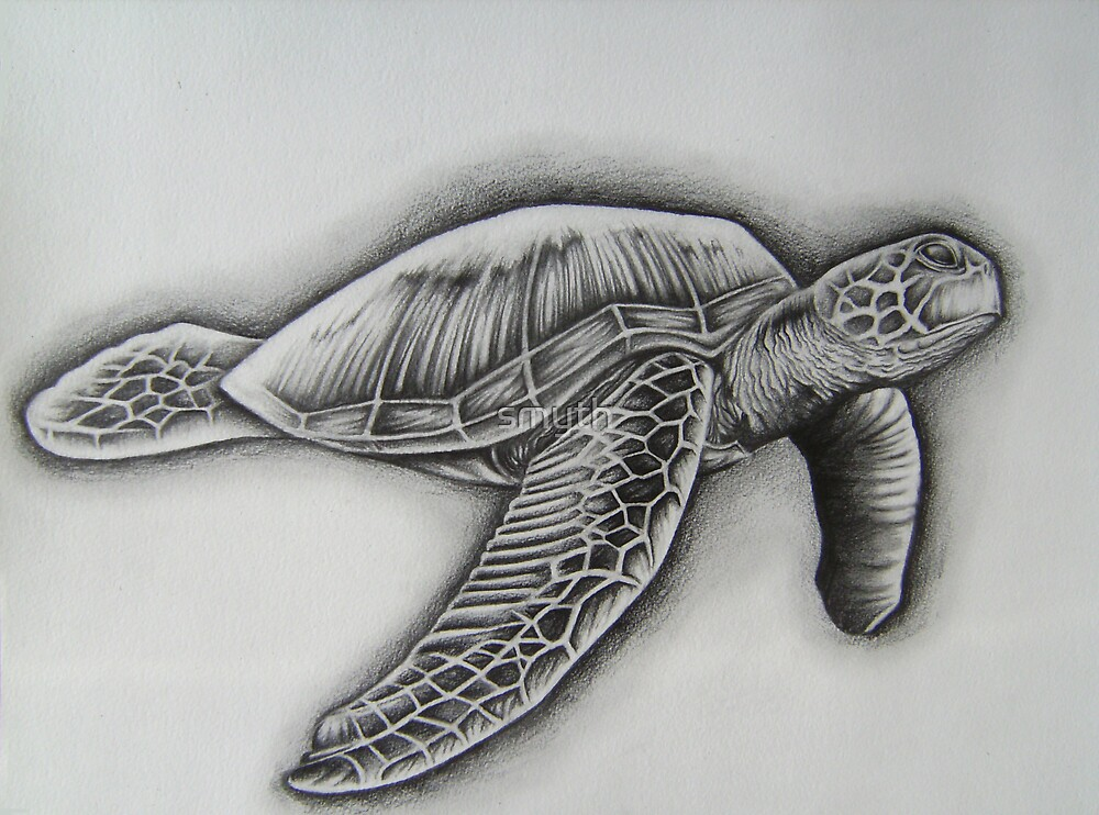 turtle by craig smith