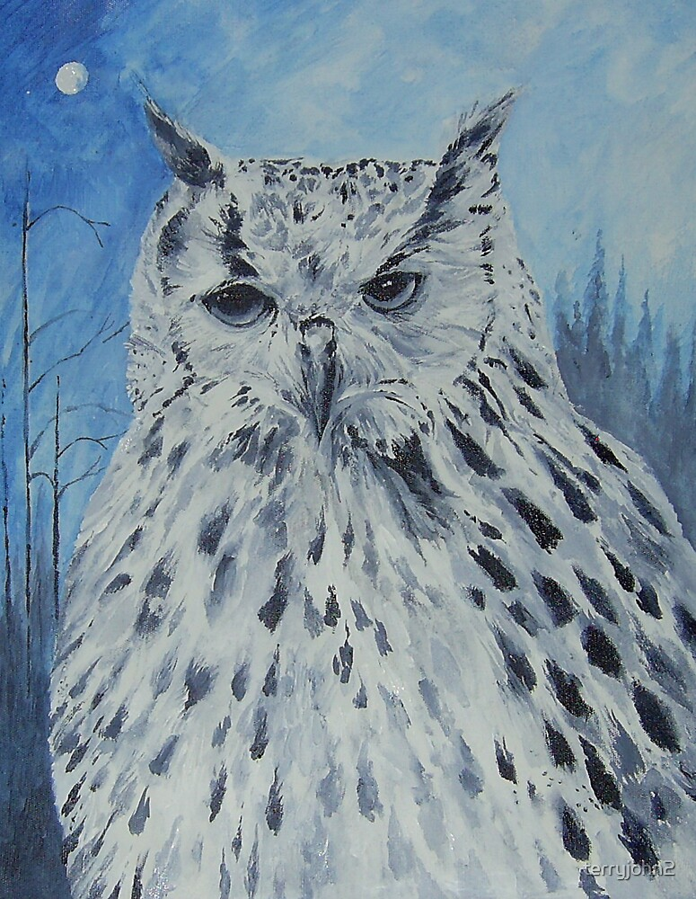 the owl by terryjohn2