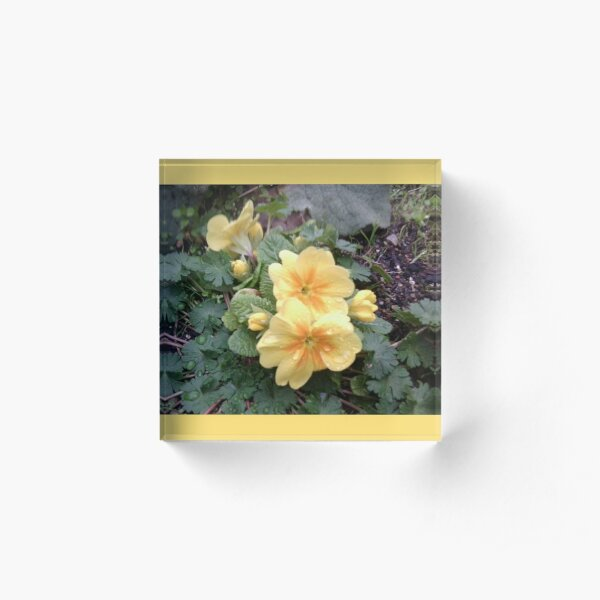 Yellow Spring Flower with Raindrops Acrylic Block