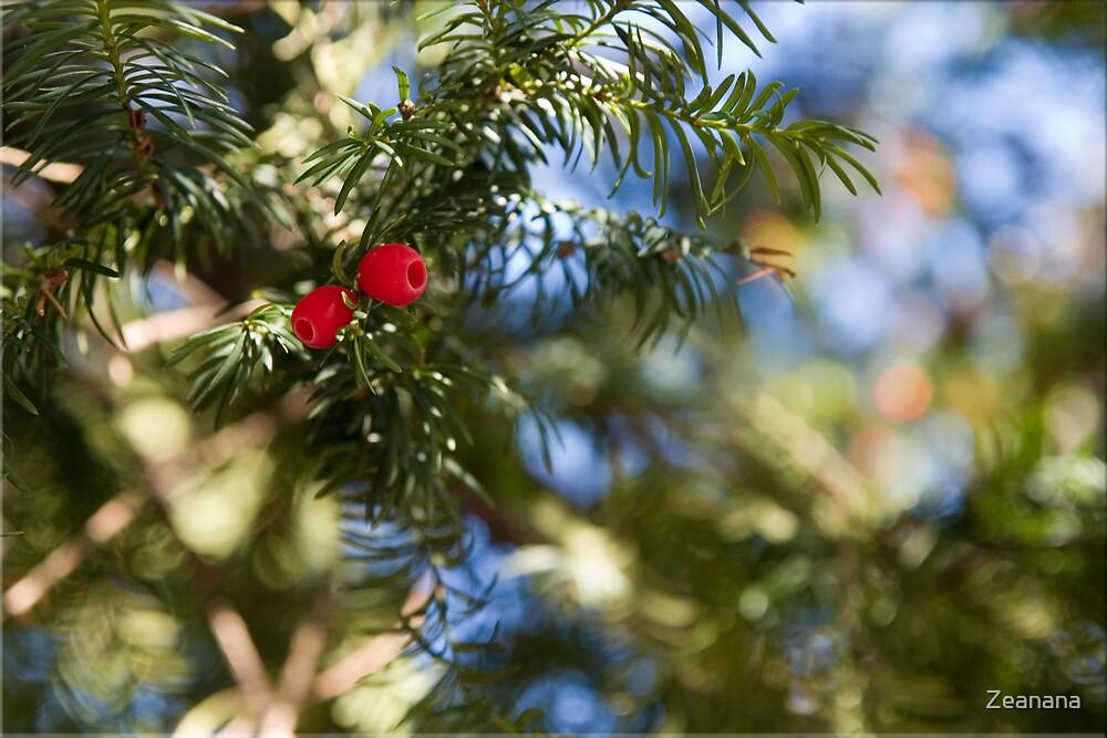 Merry Christmas ... by Zeanana