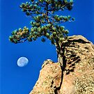 Moon Tree by Gregory J Summers