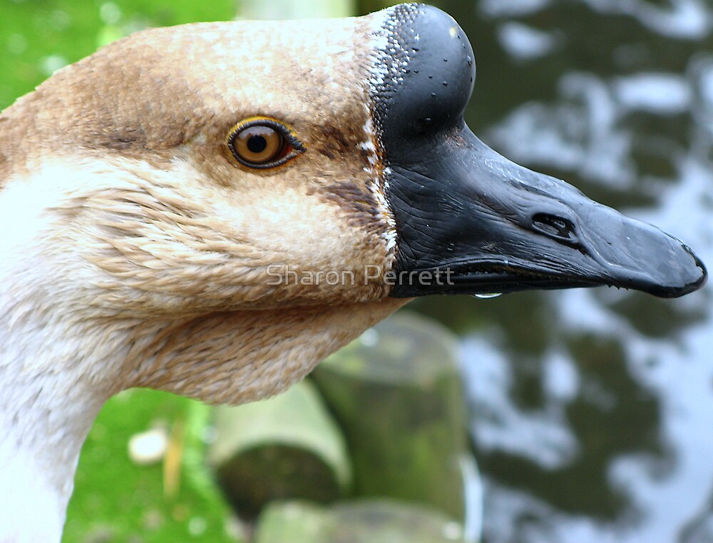 Close Up by Sharon Perrett